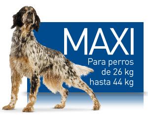 SHN MAXI (26-44 KG.)