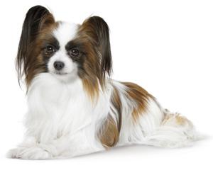Salud y nutrición para perros